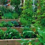 Zahradní skleník a různé druhy zeleniny